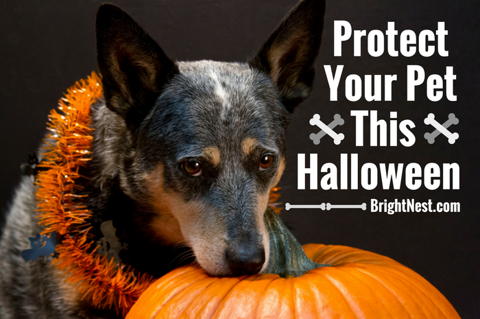 content_Protect_Your_Pet_This_Halloween